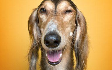 Portretet që tregojnë anën e adhurueshme njerëzore të qenve