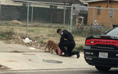 Polici ndalon në mes të rrugës të ndihmojë qenin