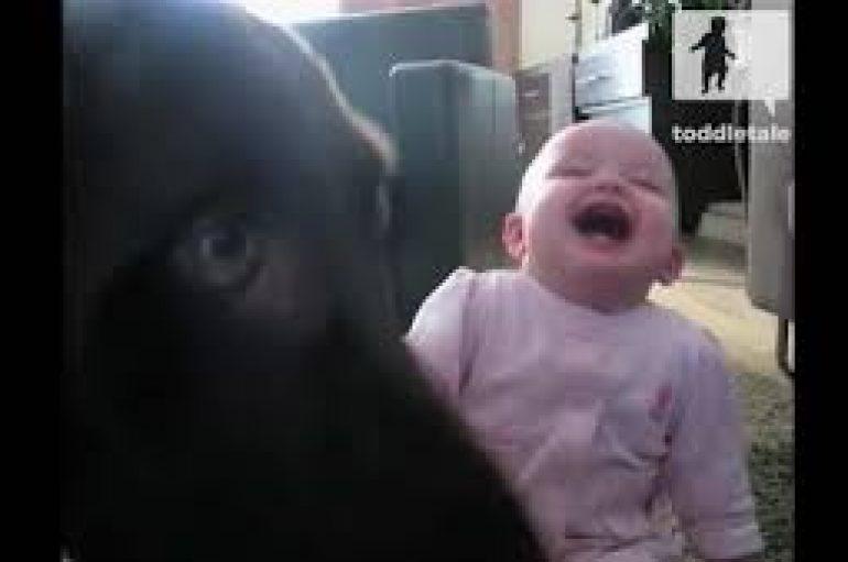 Videoja bëhet virale, e vështirë të mos shkriheni së qeshuri me vogëlushen
