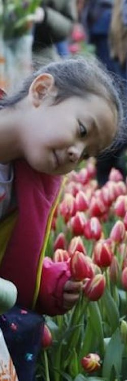 Young-Girl-With-Tulips-American-Tulip-Day-Website