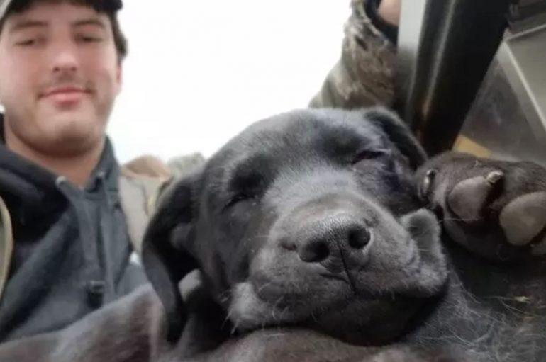 Qeni i shurdhër mëson gjuhën e shenjave pasi u adoptua nga një burrë që nuk dëgjon