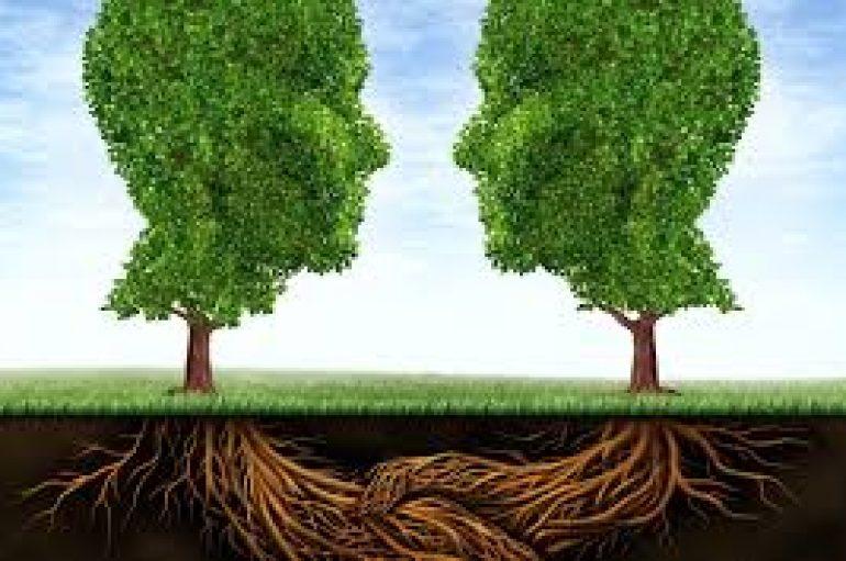 Pemët komunikojnë me njëra-tjetrën