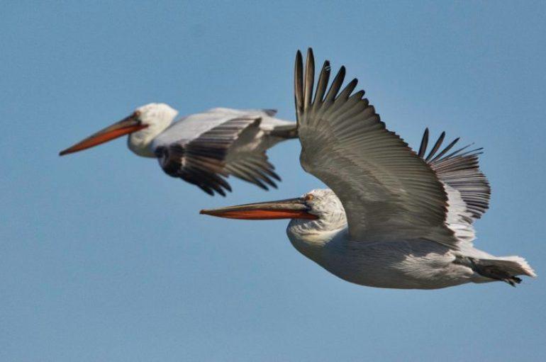 Vëzhguesit e zogjve, trend i ri turistësh në Shqipëri