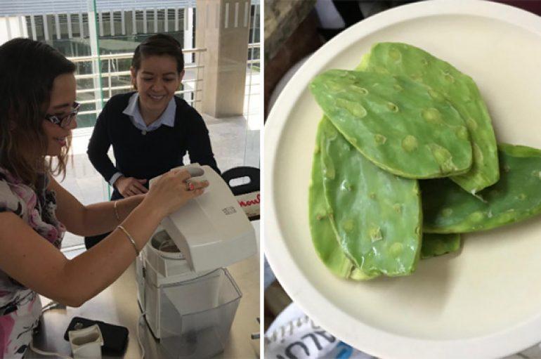 Hulumtuesja meksikane krijon plastikë nga kaktusi