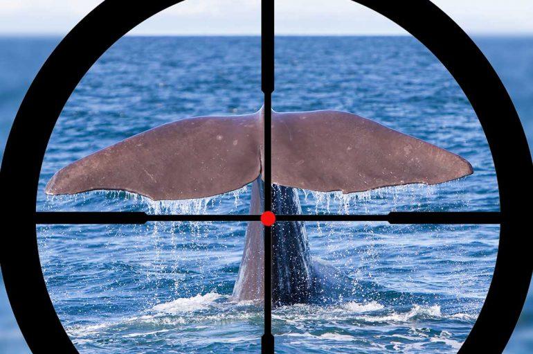 Islanda ndalon gjuetinë e balenave