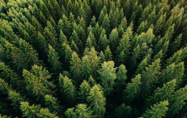 70% e kompanive fshehin lidhjen e tyre me shpyllëzimin
