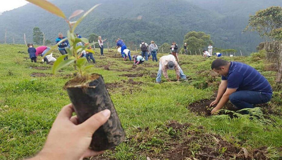 Kolumbianët mbollën 200,000 pemë brenda një dite