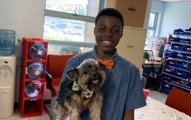 Djali bën papjone për qentë që t'i ndihmojë të adoptohen