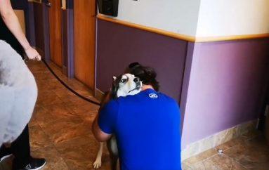 Takimi emocionues i qenit me pronarin e tij pas 4 vjetësh