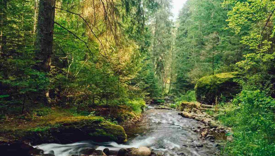 Rrjedhat dhe përrenjtë e malit marrin frymë: Ato lëshojnë më shumë CO2 nga sa mendohej