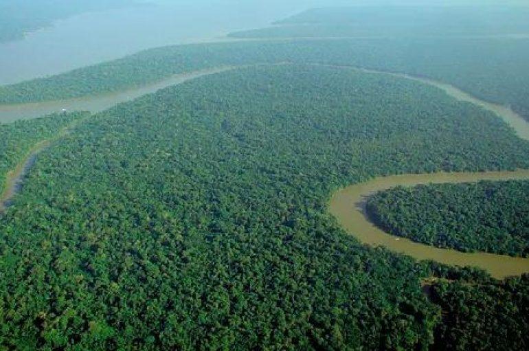 """""""Ne mund të shpëtojmë jetën në tokë"""": Studimi zbulon si të ndalojmë zhdukjen masive"""