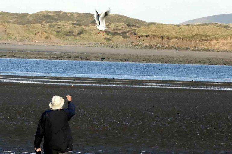 Pulëbardha viziton njeriun që e ka shpëtuar, çdo ditë në 12 vitet e fundit