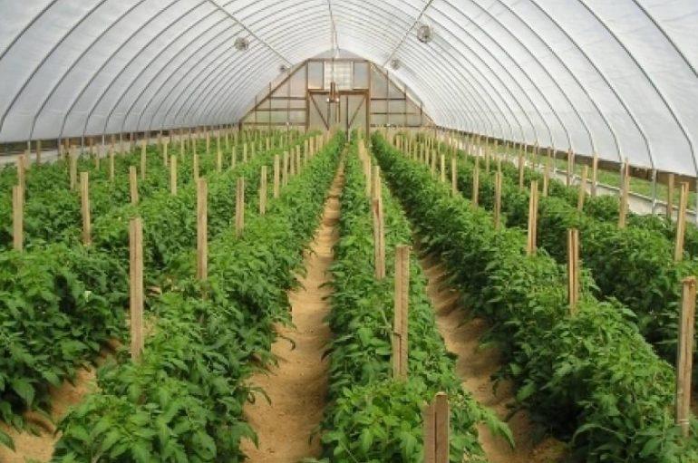 Bujqësia në kushte mbijetese, 4.5 mln USD në mbështetje të fermave të vogla