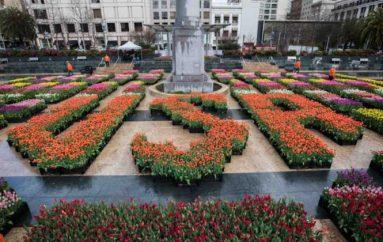 Dita e tulipanëve në Amerikë, mbi 100,000 lule falas për njerëzit