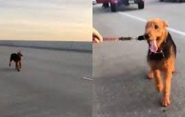 Dhjetra njerëz ndalojnë në autostradë për të shpëtuar një qen
